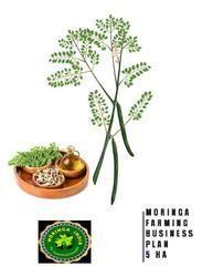 Moringa Business Plan 5 Ha For Starter
