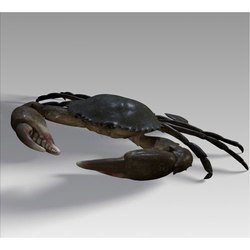 Brown Mud Crab, Packaging Type: Thermocol Box, for Home and Restaurant