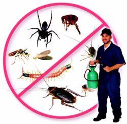 Outdoor Pest Control