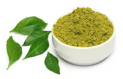 Curry Leaf Powder - Organic