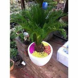 Decorative FRP Planter