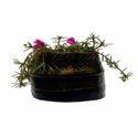 Shoe Shaped Plant Pot