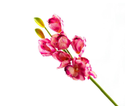 Artificial Cymbidium Flowers Stick