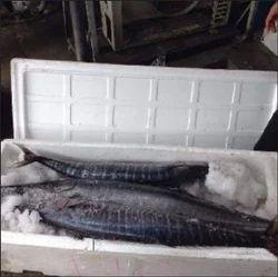Fresh Chilled Fish 01