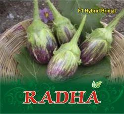 Radha  F-1 Hybrid Brinjal Seed