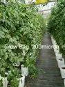 Agriculture Grow Bag