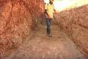 Pest Control Soil Treatment