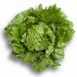 Bruma Lettuce Seeds