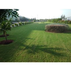 Garden Maintenance Service, in Ahmedabad