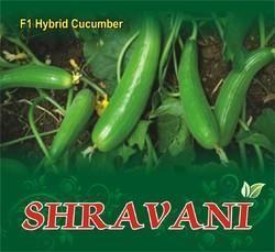 Shravani F-1 Cucumber Seeds