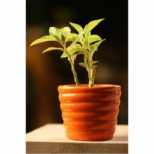 Orange Ceramic Houseplant Flower Pot