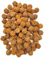 Round Brown 5 Mukhi Rudraksha, Size: Special, 4-5 Grams
