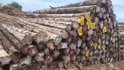 Panama Timber Logs