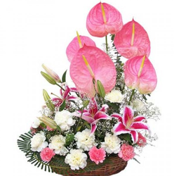 Floral Embarce Flowers