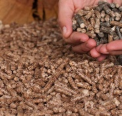 Argentine Sunflower Seed Extraction Pallets