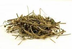Bala Panchang - Sida Cordifolia