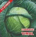 Cabbage Seeds Vimal