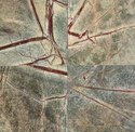 Rainforest Marble Tile