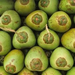 A Grade Whole Green Coconut, Coconut Size Available: Large,Medium