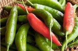 Organic Green Chili Seeds