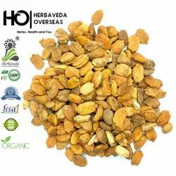 herbaveda Yellow Karela Bitter Melon Seed, For Planting, Pack Size: 100gms