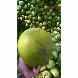 A Grade High Quality Tender Coconut, Packaging Size: 20- 50 kg, No Artificial Flavour