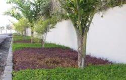 Side Wall Garden Design Service
