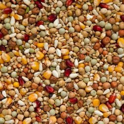 Pigeon Breeder Feed: Grain Mixture Format
