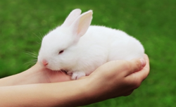 Bunnies For Sale Near Me >> Breed Rabbits Wholesale Price For Live Rabbits In India