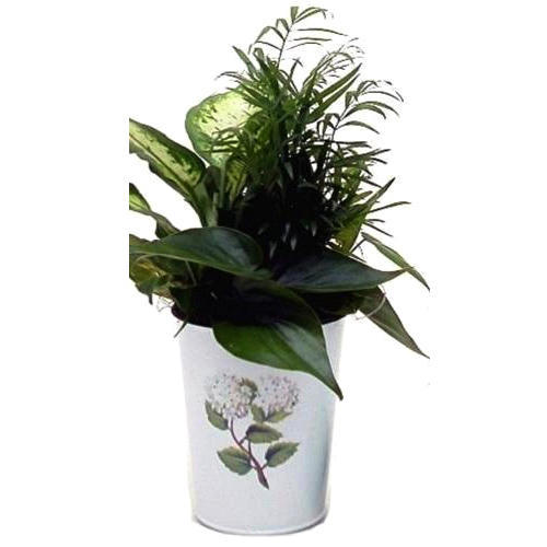 White Printed Metal Plant Pot Rs 90 Piece M R Metals Id 13602706191