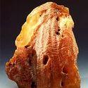 Amber Attar Pinus Succinifera
