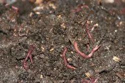 Vermi compost with Flower, Garden Specials