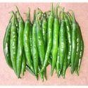 Hybrid Green Chilli Seeds CH - 42