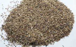Kasni Panchang - Cichorium Intybu - Chicory