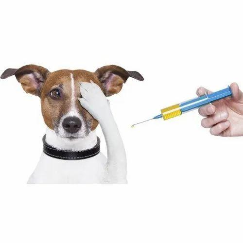 Dog Vaccine at Rs 300/piece | Phagwara| ID: 22414524862