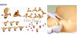 Gynecology Examination Models