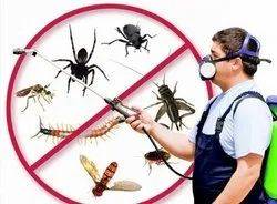 Pest Control Services,Bed Bugs Control,Cockroaches Control Rodent Control