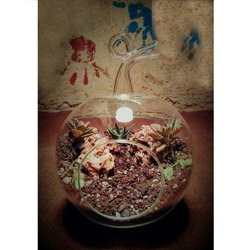 Terrariums Wholesale Price Mandi Rate For Glass Terrarium
