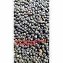 Natural Nepali Shatavari Seed, Pack Size: 1kg