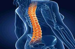 Spine Treatment Services (Scoliosis)