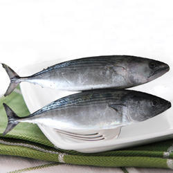 Frozen Tuna Fish, For Restaurant And Mess