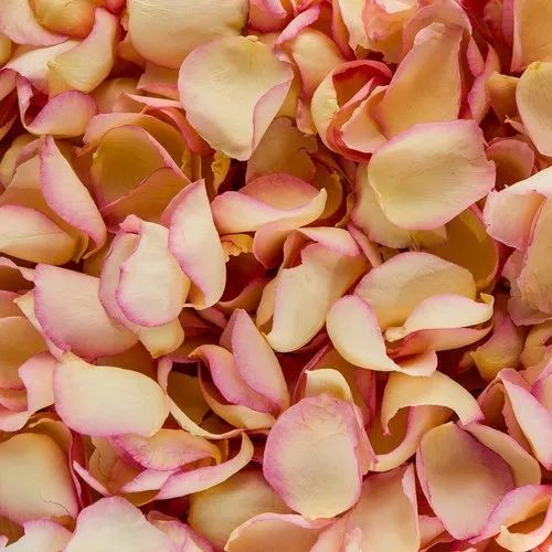 Ivory Pink Edge Dried Rose Petals