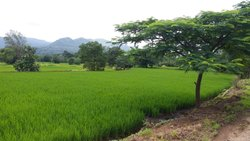 Organic Farming And Dairy Farm With Land...