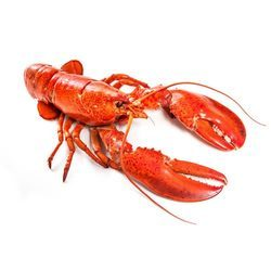 Lobster - Wholesale Price & Mandi Rate for Lobster