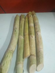 Sugarcane Cut & Peeled And Packed, India