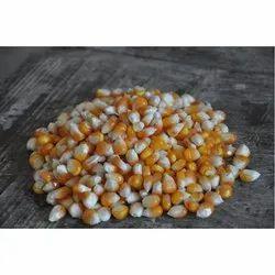 Dry Hybrid Maize Seeds, Packaging Type: Jute Bag, Packaging Size: 60 Kg