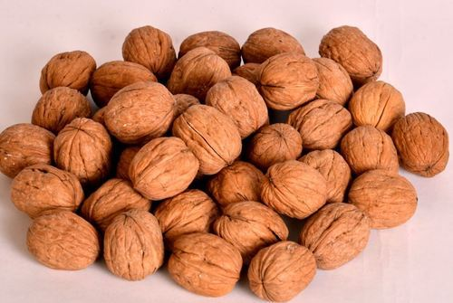 Dry Fruits - Walnut In Shell (Akhrot) Manufacturer from Jodhpur