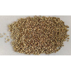 spinach seed
