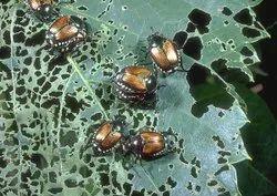 Bio Pesticide Consortium