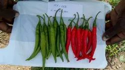 Green A Grade 162 Hybrid Chilli, For Agriculture, Pack Size: 10